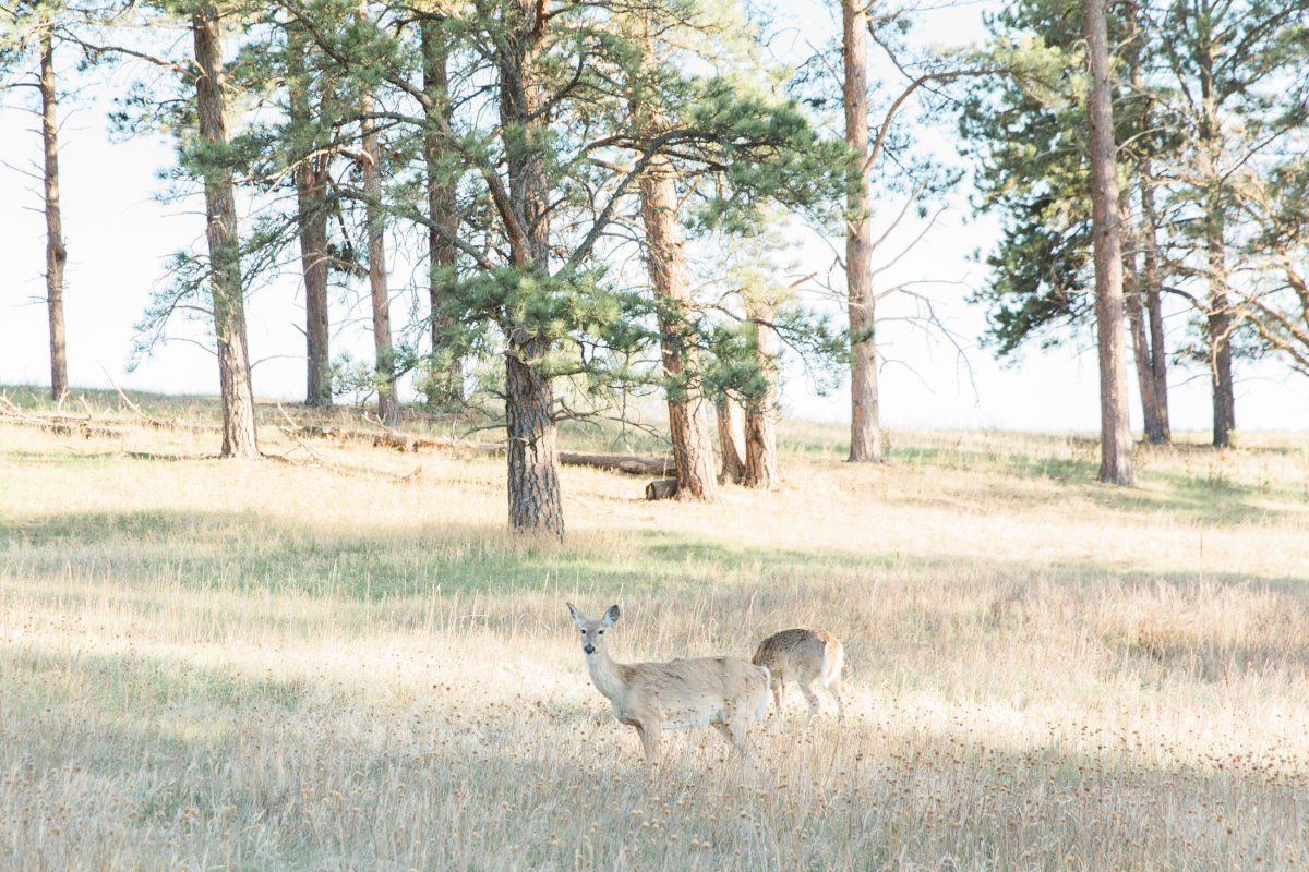 These deer are pretty.